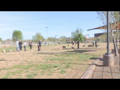 Why dog parks can be harmful