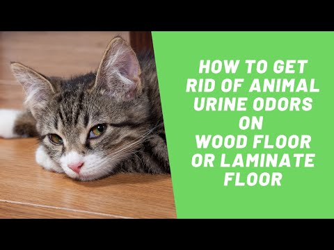 How to get rid of animal urine smell on wood floor or laminate floor | sos odours