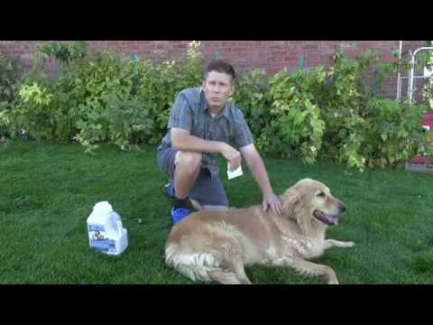 How to use diatomaceous earth on dogs for fleas