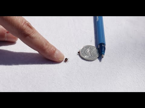 How to tell the difference between ticks