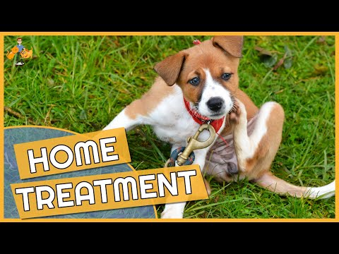 Dog skin allergy home remedies - cure their itch!