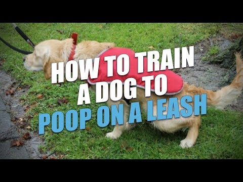 How to train a dog to poop on a leash (the easy way)
