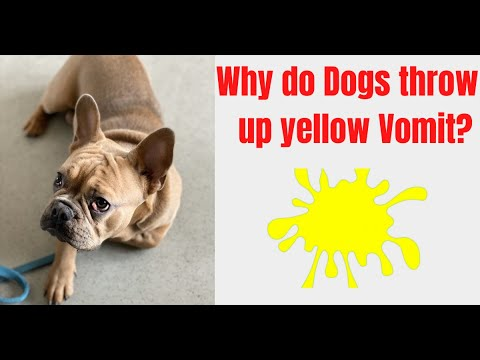 Why do dogs throw up yellow vomit? [yellow vomit means in dogs]
