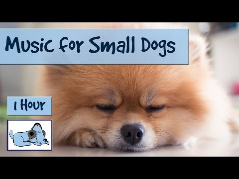 1 hour of music for small dogs. chihuahuas, yorkshire terriers, poms.