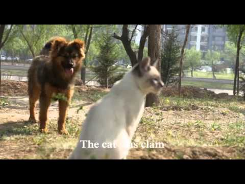 When a cat meets a dog in the park