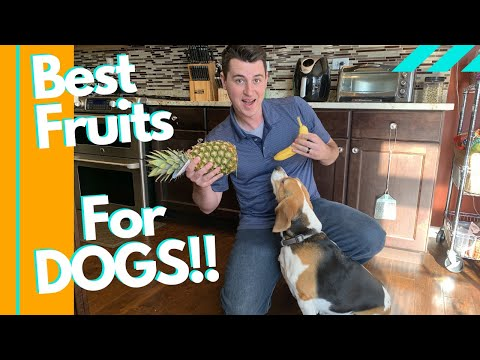 Can dogs eat pineapple?? (best fruits for dogs!!)