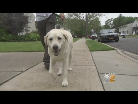Dog's duty prompts pepper spray to owner's face