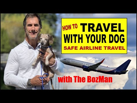 How to travel with your dog - small dog airline travel - dog training