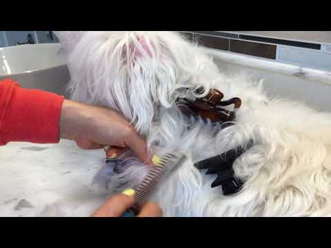 Remove tangled and matted hair (dematting) - dog pet grooming