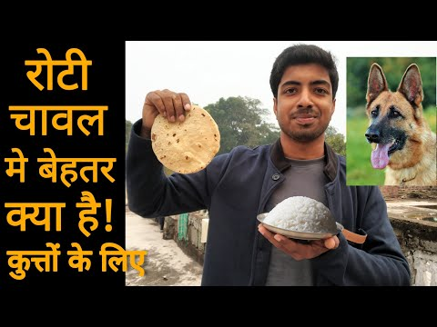 Dog food - roti v/s rice which is better for your dog!!! 🔥 🔥