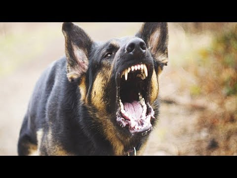 How to stop your german shepherd from biting and nipping