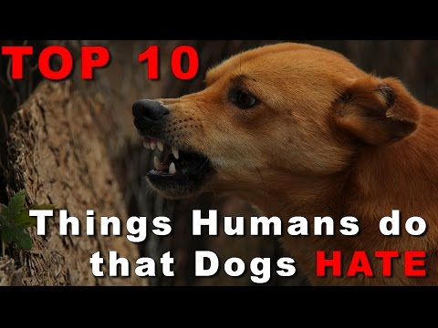 Top 10 things people do that dogs hate you won't believe