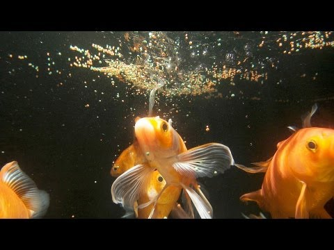 How much & often should you feed fish? | aquarium care