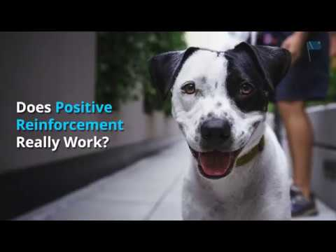 Does positive reinforcement really work? | dog training nation