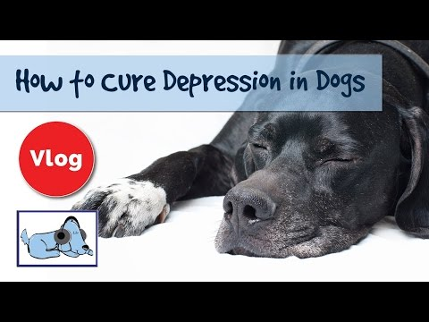 How to cure depression in dogs! dog depression signs and advice!