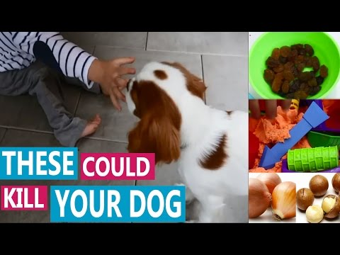 Foods dogs should not eat