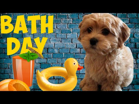 If dogs like to swim, why don't they like baths ?