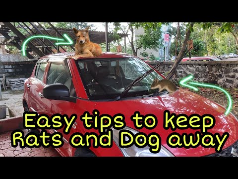 How to protect your car from rats & dogs   easy tips to keep rats & dogs away   #car