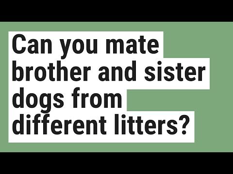 Can you mate brother and sister dogs from different litters?
