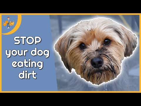 Why do dogs eat dirt (and how to stop them!)