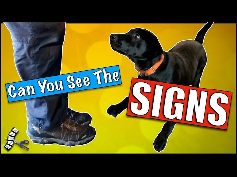 How to stop your dog from jumping up on people