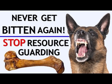 How to stop food aggression & resource guarding stop biting when giving treats