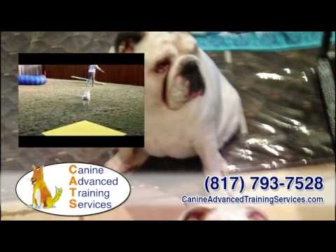 Canine advanced training services | dog obedience & behavior group/private classes | fort worth, tx