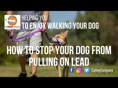 The best collar to train your dog to stop pulling on lead | kind, safe, comfortable & effective