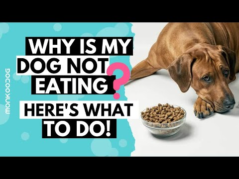 What to do when your dog not eating food or drinking water l tips on loss of appetite l