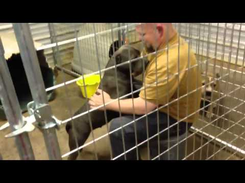 How to keep pitbulls from being aggressive