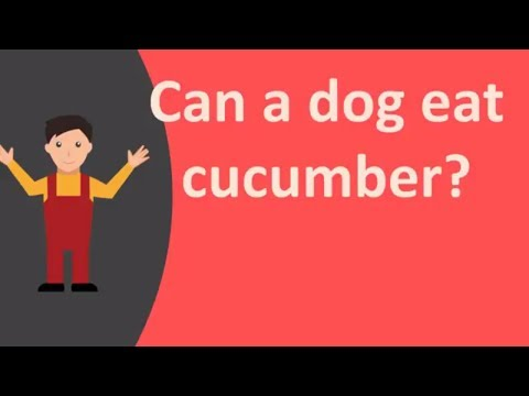 Can a dog eat cucumber ?