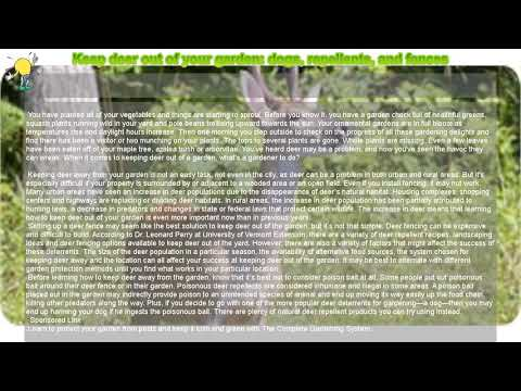 How to : keep deer out of your garden: dogs, repellents, and fences
