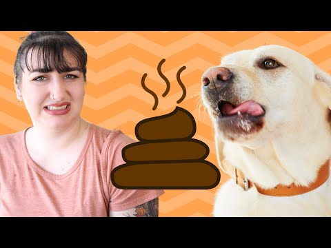 How to stop your dog from eating poop and why they do it