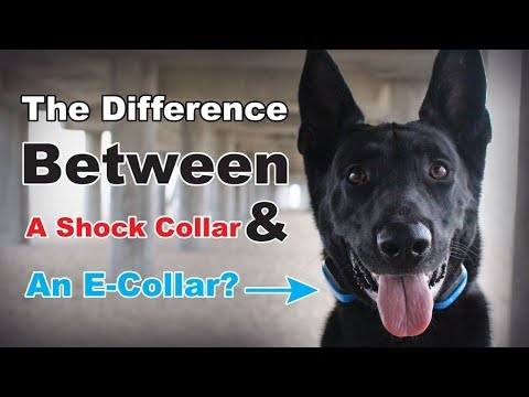 What is the difference between a shock collar & e-collar? the truth about e collar dog training (#9)