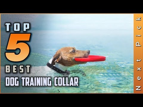 Top 5 best dog training collar review in 2020