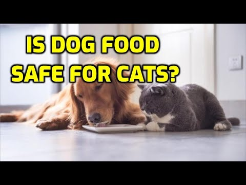 Can cats eat dog food for one day?