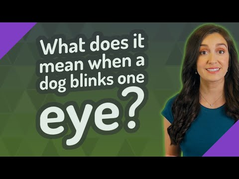 What does it mean when a dog blinks one eye?