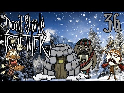 Infiltrating the walrus camp   don't starve together #36