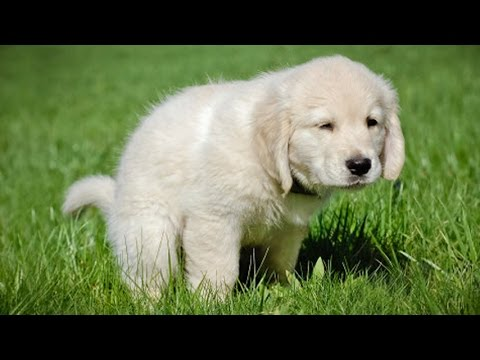 How to potty train a puppy in 7 easy steps