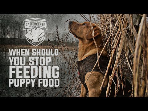 How long should dogs eat puppy food