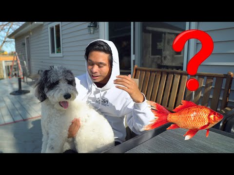 Why does my dog smell? (like fish)