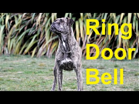 Train your dog to ring a bell to go potty
