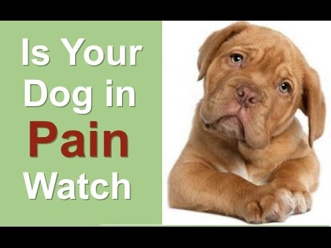 Anti inflammatory for dogs - over the counter anti inflammatory for dogs