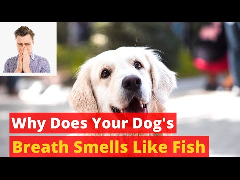 Why does your dog breath smells like fish? how to stop his bad breathe?