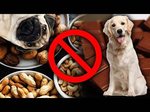 Dog lovers beware 9 foods that are toxic to your dogs