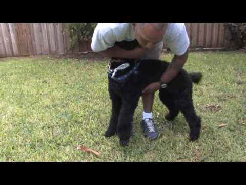 How to stop your dog from jumping on you