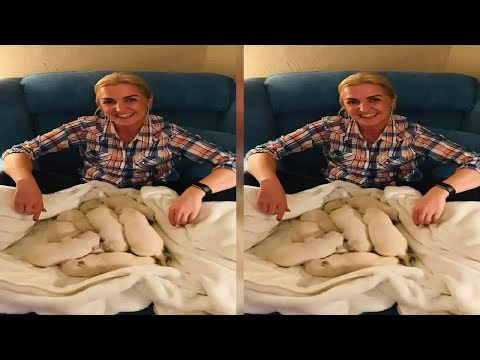 Golden retriever gives birth to green puppy due to rare condition - today news