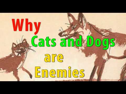 Fairytale for kids - why cats and dogs are enemies - bedtime story