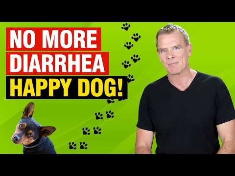 How to stop diarrhea in dogs naturally (treatment, remedies and diet)