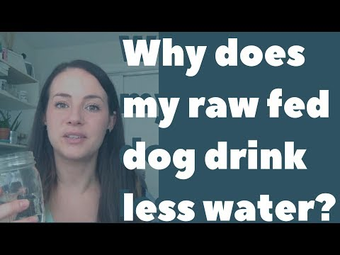 Why does my raw fed dog drink less water and is it ok?